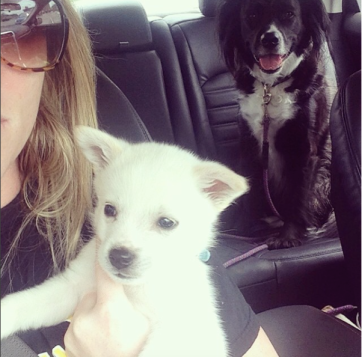 On the way to the vet..