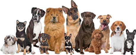 file_2153_column_popular-dog-names