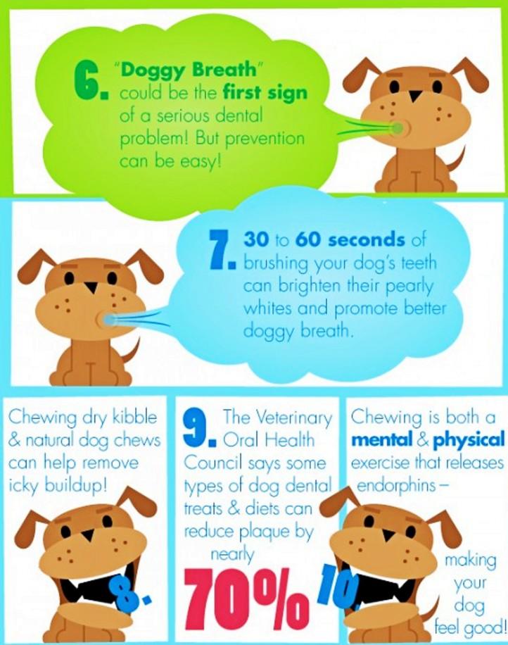 Doggie Dental 3.jpg
