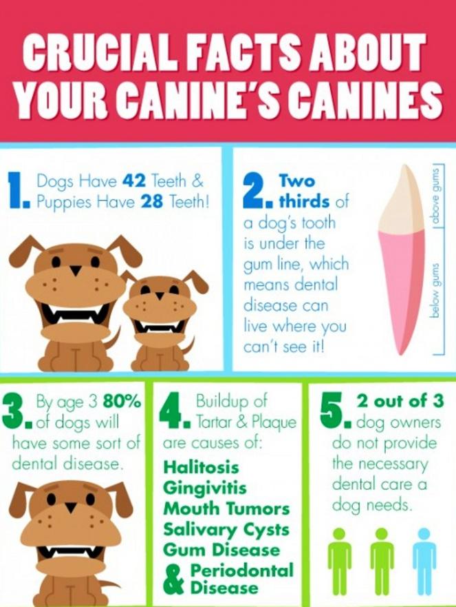 Doggie Dental.jpg