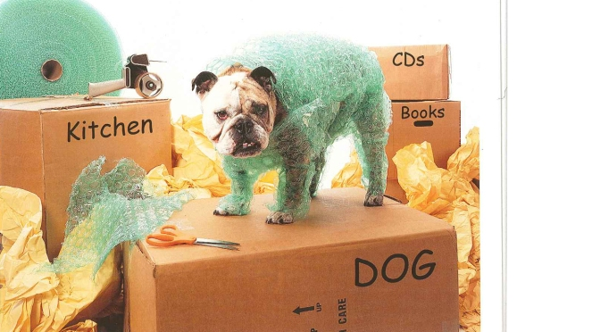 dog-moving-2