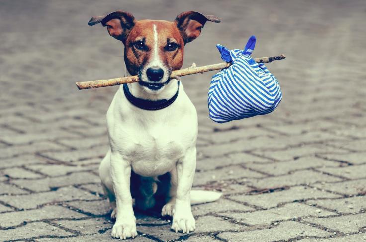 dog-moving